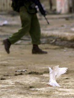 paloma blanca y silueta fusil soldado jun 10 07