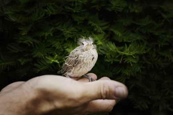 hand-baby-cardinal-cardinal-bird-67293.jpeg